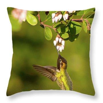 Hummingbird And Manzanita Blossom Throw Pillow