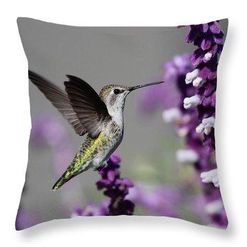 Hummingbird And Purple Flowers Throw Pillow