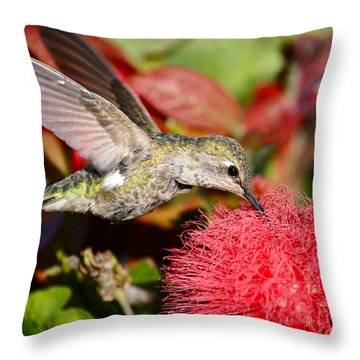 Hummingbird And Red Flower Throw Pillow