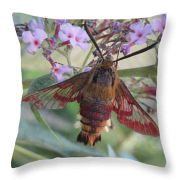 Hummingbird Butterfly Throw Pillow