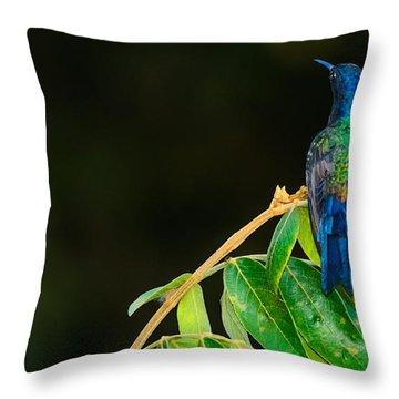 Hummingbird Throw Pillow by Daniel Precht