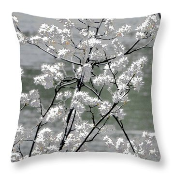 Throw Pillow featuring the photograph Hummingbird by EDi by Darlene