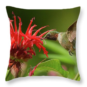 Hummingbird Delight Throw Pillow