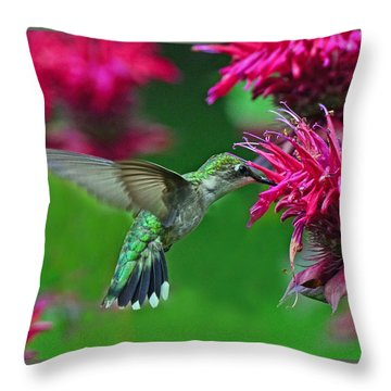 Throw Pillow featuring the photograph Hummingbird Gathering Nectar by Rodney Campbell