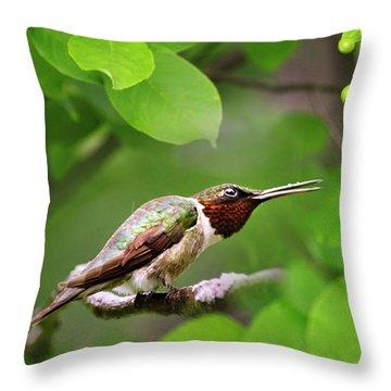 Hummingbird Hiding In Tree Throw Pillow by Christina Rollo