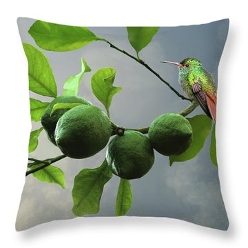 Hummingbird In Lime Tree Throw Pillow