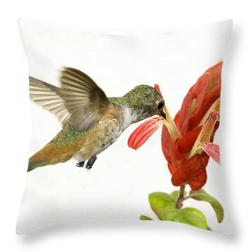 Hummingbird In The Flower Throw Pillow by Phil Stone