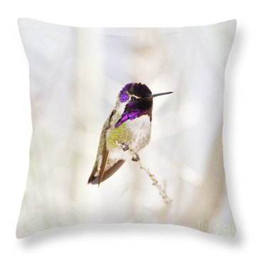 Hummingbird Larger Background Throw Pillow by Rebecca Margraf