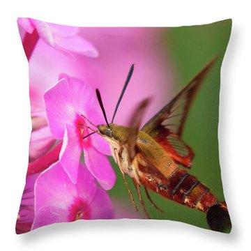 Hummingbird Moth Feeding 1 Throw Pillow