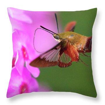 Hummingbird Moth Feeding 2 Throw Pillow