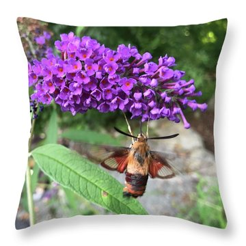 Hummingbird Moth Throw Pillow