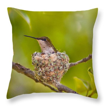 Hummingbird Nesting Throw Pillow