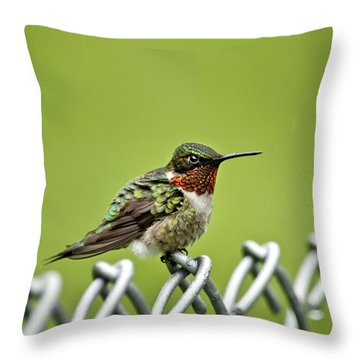 Hummingbird On A Fence Throw Pillow by Christina Rollo