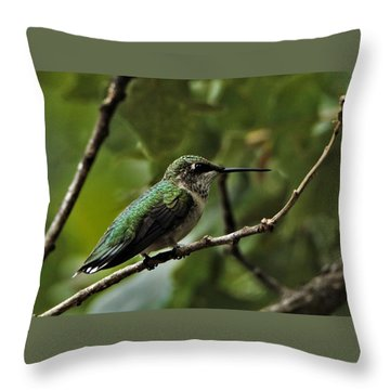 Hummingbird On Branch Throw Pillow