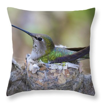 Hummingbird On Nest Throw Pillow by Paul Marto