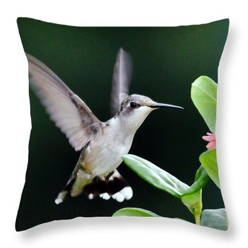 Hummingbird On The Approach Throw Pillow
