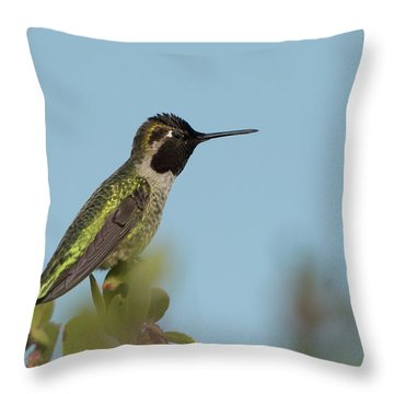 Hummingbird On Watch Throw Pillow