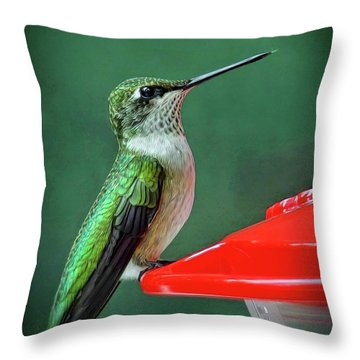 Throw Pillow featuring the photograph Hummingbird Portrait by Sue Melvin