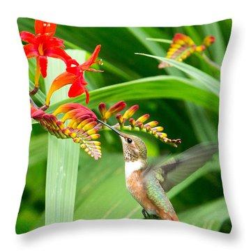 Hummingbird Snacking Throw Pillow