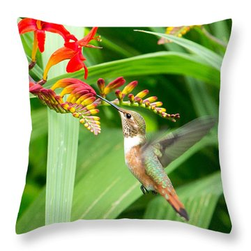 Hummingbird Snacking Throw Pillow