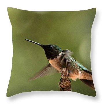 Hummingbird Take-off Throw Pillow