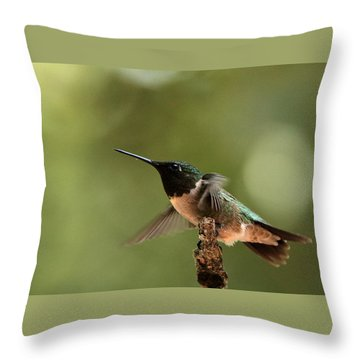 Hummingbird Take-off Throw Pillow by Sheila Brown