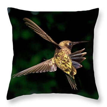 Hummingbird Taking Off Throw Pillow