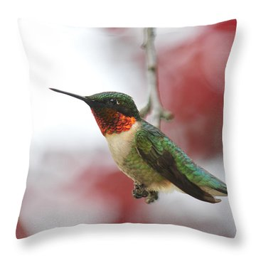 Throw Pillow featuring the photograph Hummingbird Watch Tower by Lara Ellis