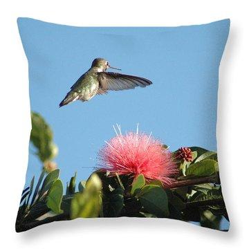 Hummingbird With Pink Flower Throw Pillow