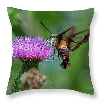 Hummingbirdbird Moth Dining Throw Pillow