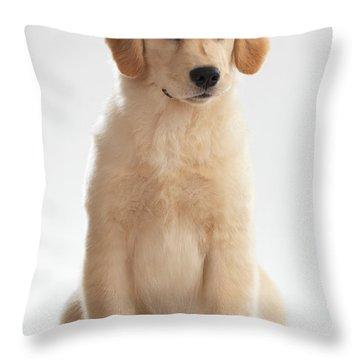 Humorous Photo Of Golden Retriever Puppy Throw Pillow by Oleksiy Maksymenko