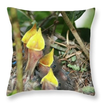 Hungry Baby Birds Throw Pillow by Jerry Battle