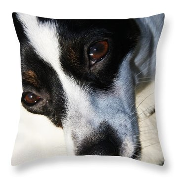 Throw Pillow featuring the photograph Hungry Dog by Jorgo Photography - Wall Art Gallery