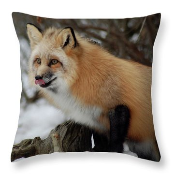 Throw Pillow featuring the photograph Hungry Fox by Richard Bryce and Family