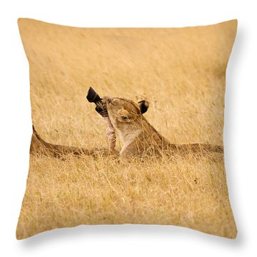 Hungry Lions Throw Pillow by Adam Romanowicz