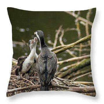 Hungry Pied Shag Chicks Throw Pillow
