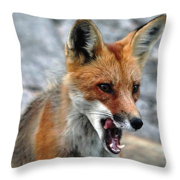 Hungry Red Fox Portrait Throw Pillow by Debbie Oppermann