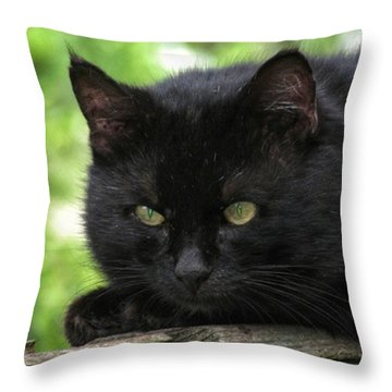 Lovecats Throw Pillows