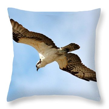 Hunter Osprey Throw Pillow by Carol Groenen