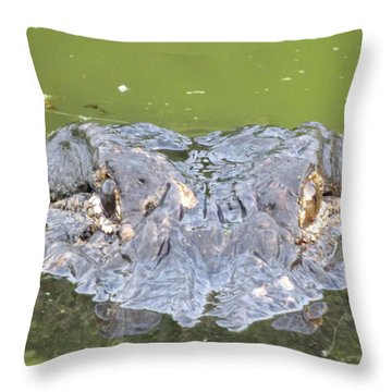 Hunters Stare Throw Pillow by Kimo Fernandez
