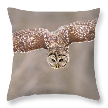 Hunting Barred Owl  Throw Pillow