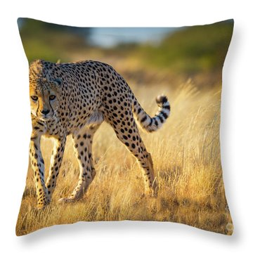 Hunting Cheetah Throw Pillow by Inge Johnsson