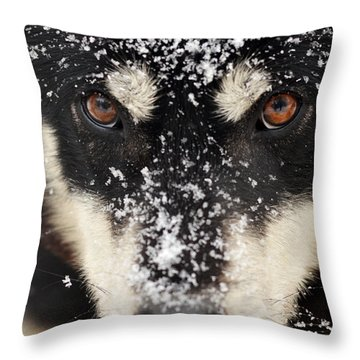Husky And Snow Close-up Throw Pillow