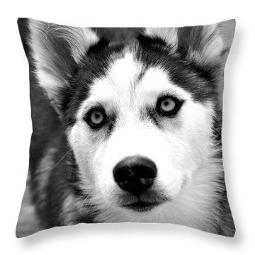 Husky Pup Throw Pillow
