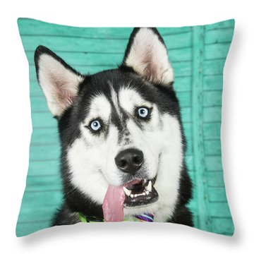 Husky With Tie Throw Pillow by Stephanie Hayes