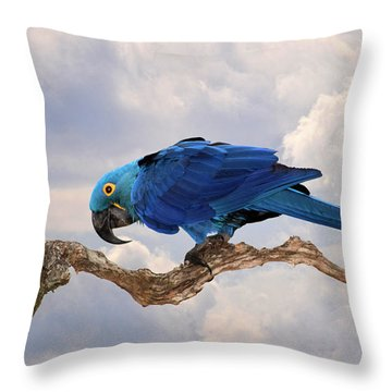 Hyacinth Macaw Throw Pillow by Wade Aiken