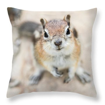 Hypno Squirrel Throw Pillow