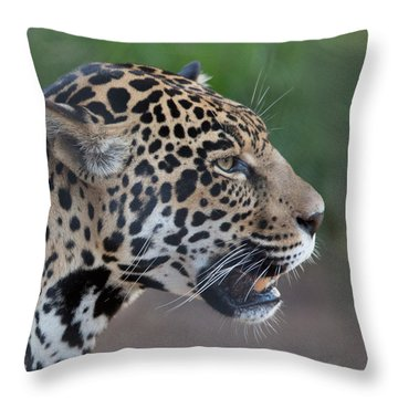 I Am Not Happy Throw Pillow