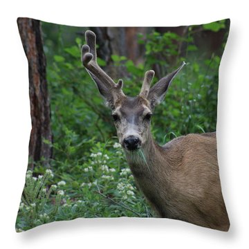 I Feel Lopsided Throw Pillow