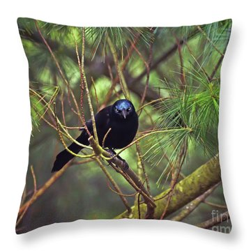 Throw Pillow featuring the photograph I Have My Eyes On You - Grackle In The Pines by Kerri Farley